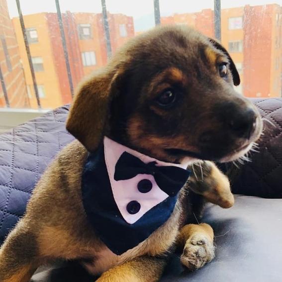vicente perro adopcion colombia 1