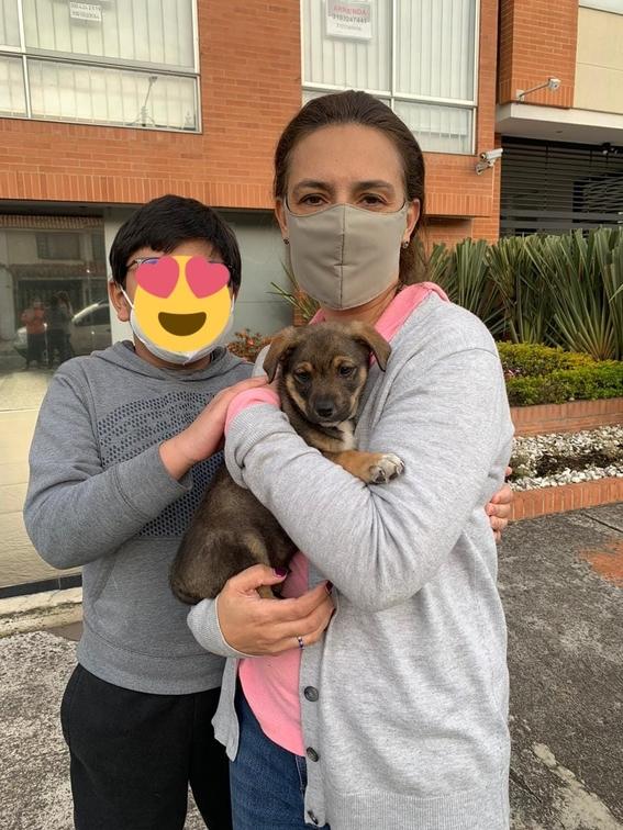 vicente perro adopcion colombia 2
