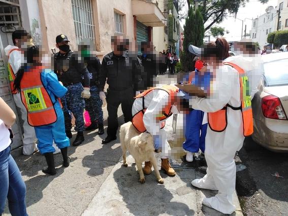policias sin orden de cateo maltrato animal cdmx 1