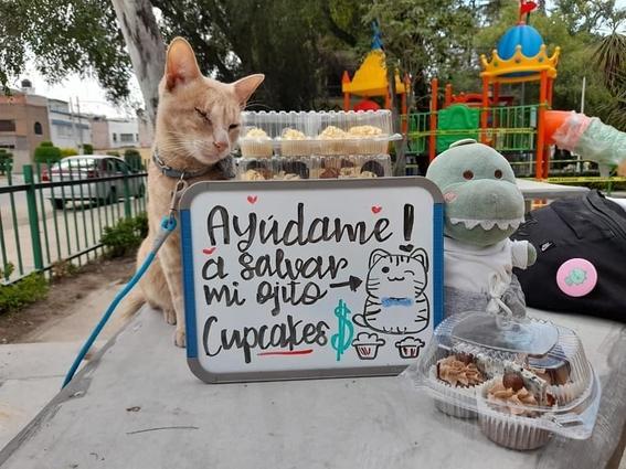 gato vende cupcakes cirugia ojo cdmx 1
