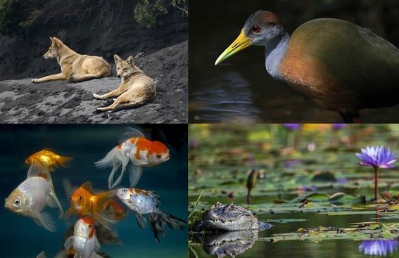 wwf fauna se ha reducido en medio siglo 1