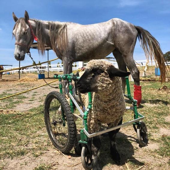 cuacolandia fundacion que protege a caballos maltratados 1