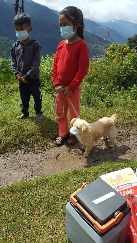 foto ninos le ponen un cubrebocas a su perro en guatemala y se vuelve viral 1