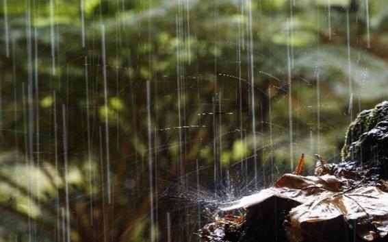 ¿de donde viene el olor a lluvia que tanto gusta 3