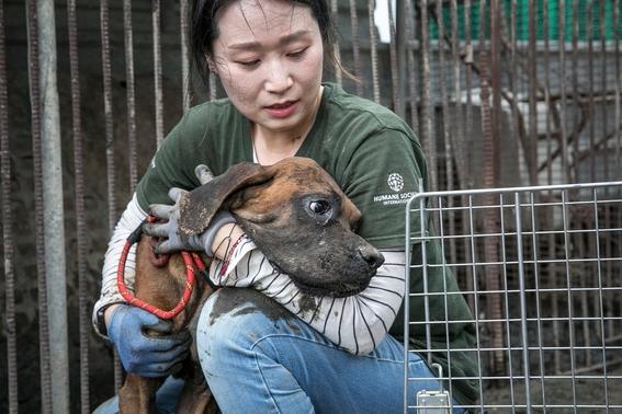 rescatan perros de granjas de carne en corea del sur 2