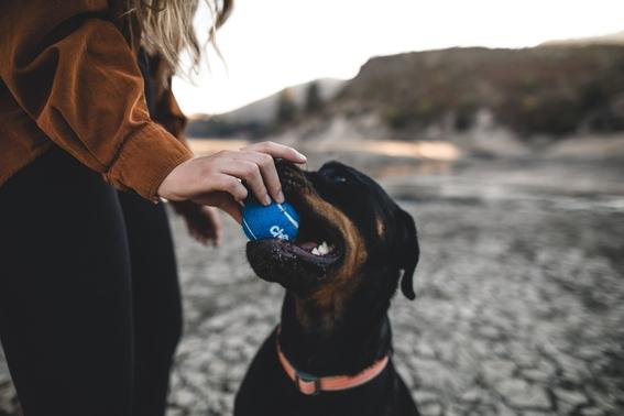 video asi llama esta duena a su perro sordo para que vuelva a casa 1