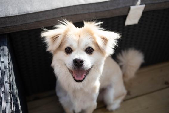 segun estudio de la unam los perros tienen la capacidad de sonreir 1