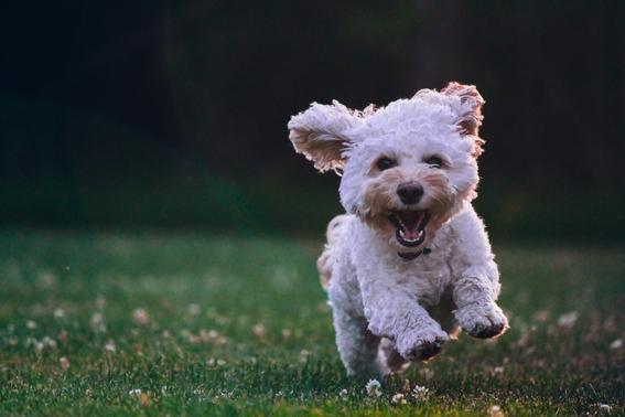 segun estudio de la unam los perros tienen la capacidad de sonreir 2
