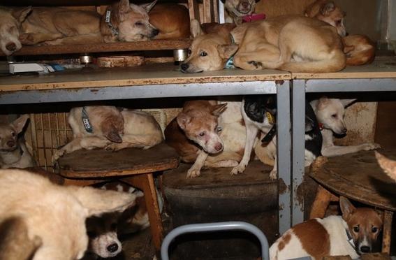 perros hacinados japon 1