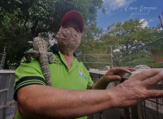 robo iguanas juchitan oaxaca 1