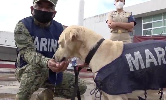 sera parte de la marina el perrito rescatado en inundaciones de tabasco 1