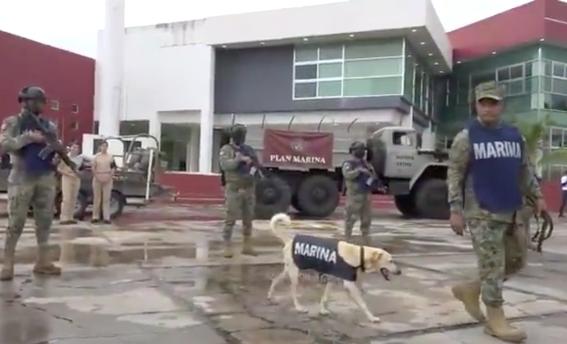 sera parte de la marina el perrito rescatado en inundaciones de tabasco 2