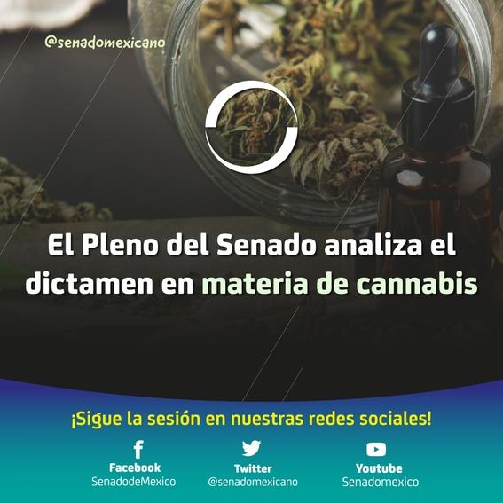 uso del cannabis legal en mexico senado 2