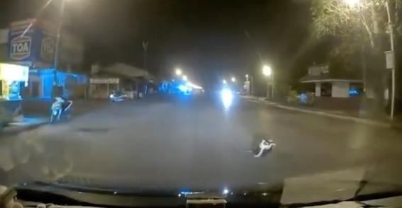 vecinos logran detener a una serpiente que estrangulaba a un gato 1