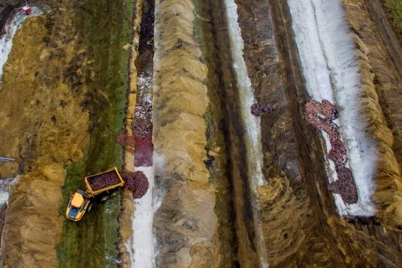 los visones sacrificados para prevenir un brote de covid19 en dinamarca estan emergiendo de la tierra 2