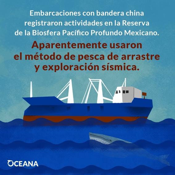 pesca ilegal mexico areas protegidas 1