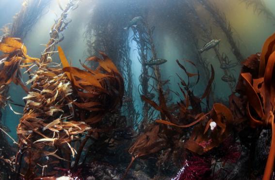 pesca ilegal mexico areas protegidas 3