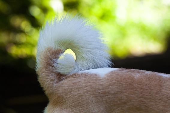 avalan en tamaulipas reformas que prohiben mutilar cola y orejas a mascotas 2