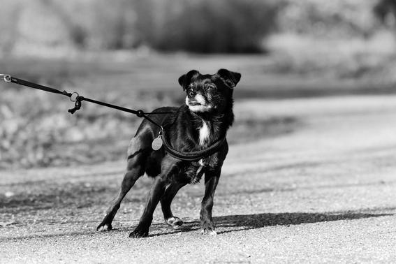 perros amarrados en la azotea prohibiran tener perros amarrados en coahuilas perros maltratados perros que solo estan en azotea o terrenos bal 1