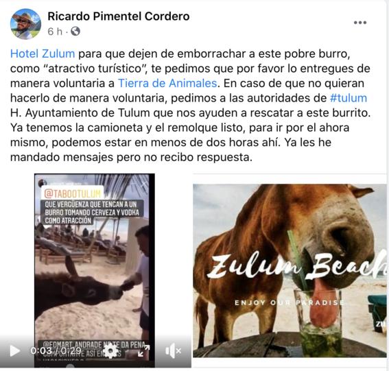 burro borracho tulum quintana roo 1