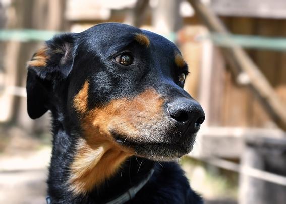 proponen hasta seis anos de carcel y sanciones economicas por abandono y maltrato animal 1