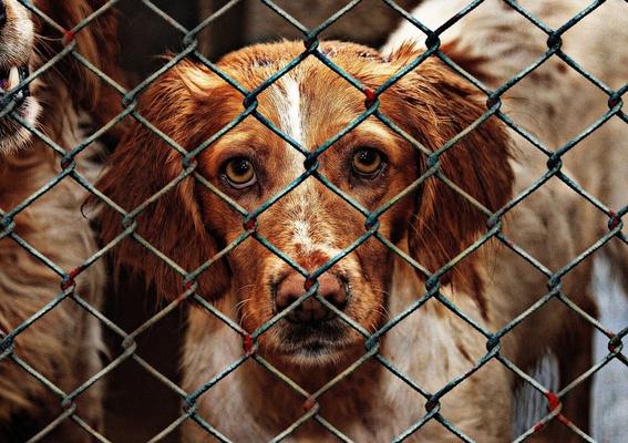 proponen hasta seis anos de carcel y sanciones economicas por abandono y maltrato animal 2