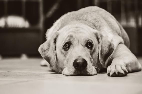 proponen hasta seis anos de carcel y sanciones economicas por abandono y maltrato animal 3