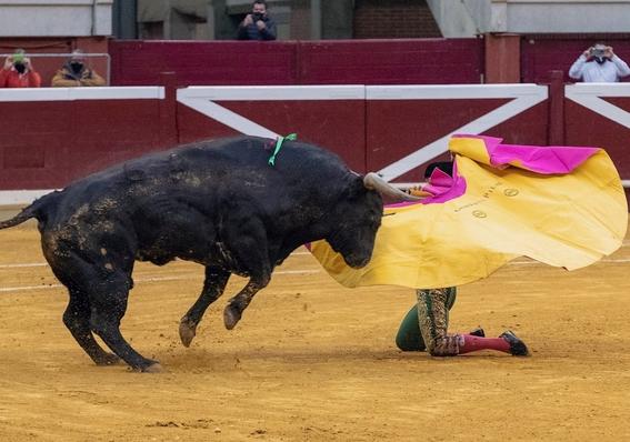 ¿se excluyo a la tauromaquia como candidata a patrimonio cultural 2
