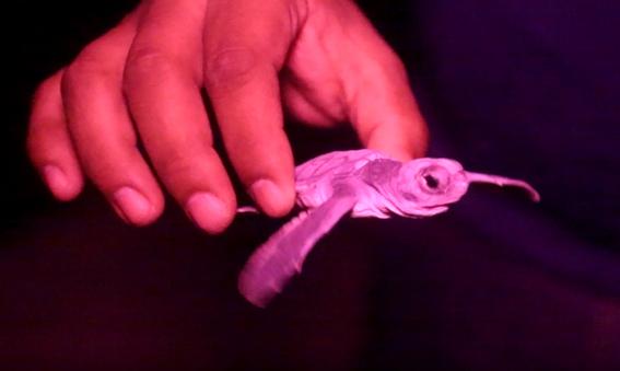 tortugas cancun quintana roo 1