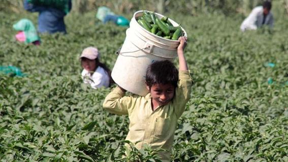 el trabajo infantil en mexico afecta a 33 millones de ninos 1