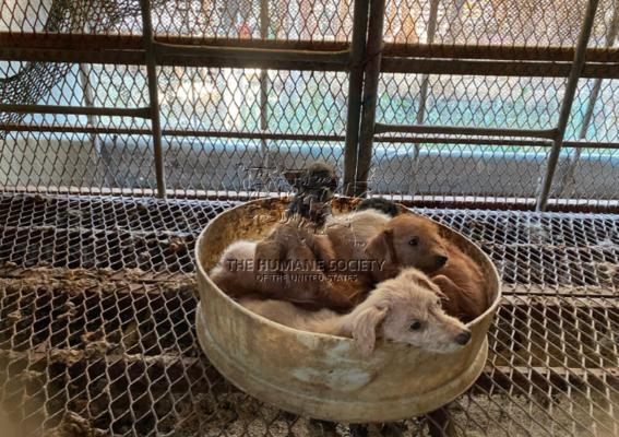perros canibales corea del sur 1