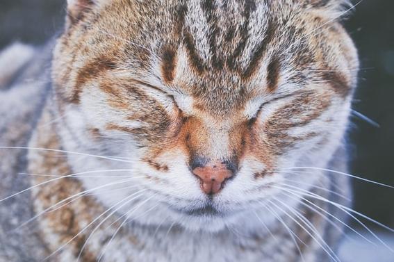 proteger mascota contagio covid 1