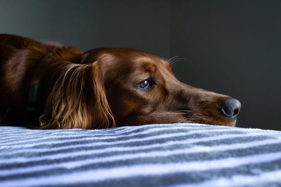 proteger mascota contagio covid 2