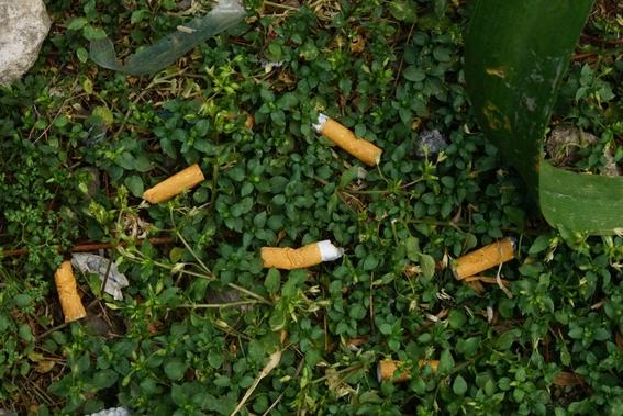 ¿como afecta el medio ambiente una colilla de cigarro y como evitarlo 1