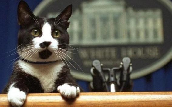 ¿por que celebramos varias veces al ano el dia internacional del gato 2