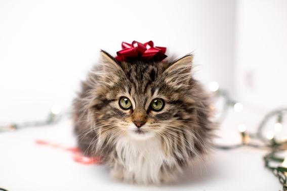 ¿por que celebramos varias veces al ano el dia internacional del gato 1