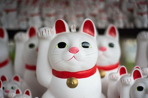 ¿por que celebramos varias veces al ano el dia internacional del gato 4
