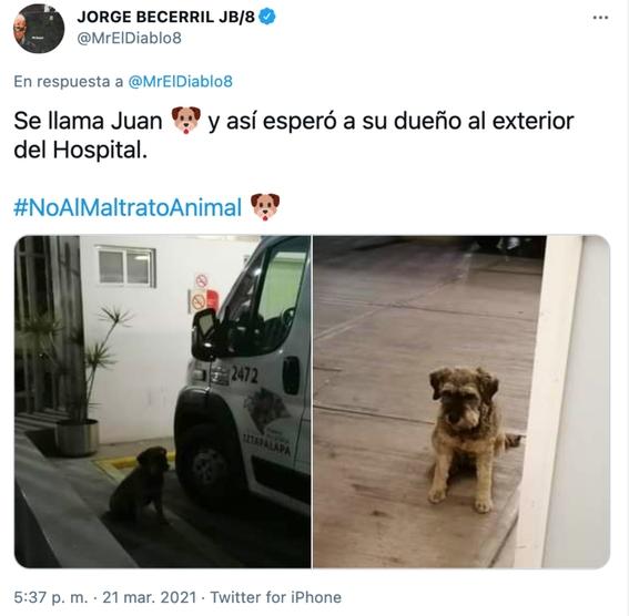 perrito persigue ambulancia que llevaba a su dueno y paramedicos lo dejan subir 1