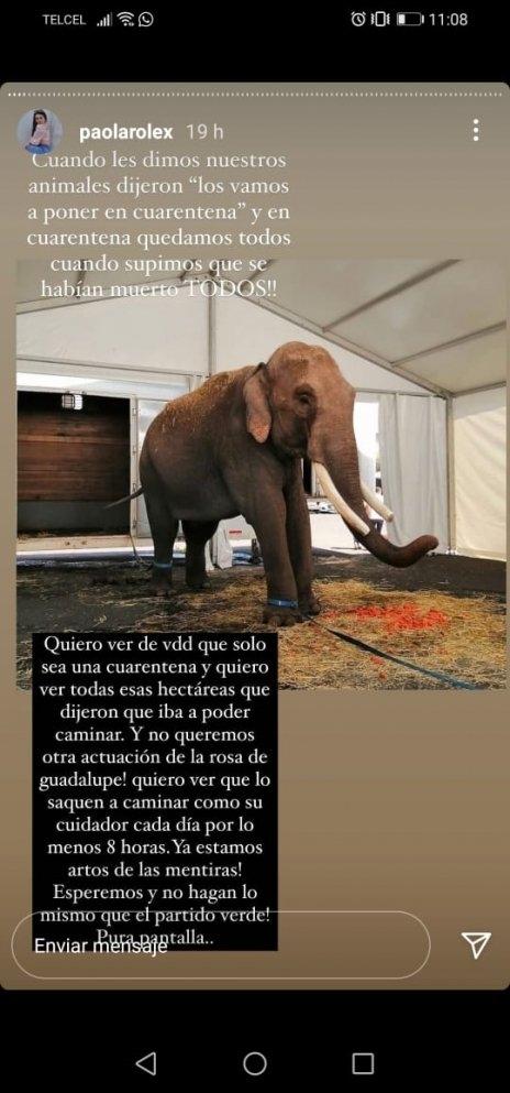 acusan arturo islas armar circo presunto rescate elefante big boy 1