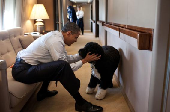muere perro bo barack obama 1
