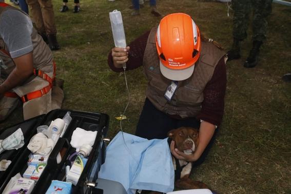 rescatan perros socavon puebla 1