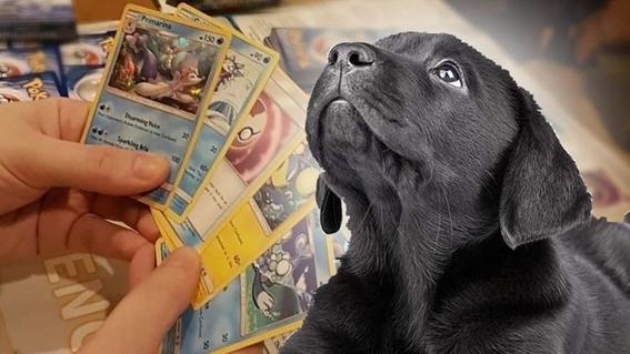 nino salva perro cartas pokemon 1