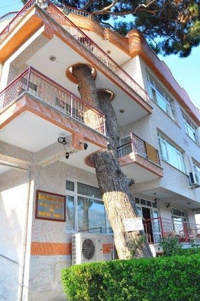 arbol 330 anos edificio turquia 1