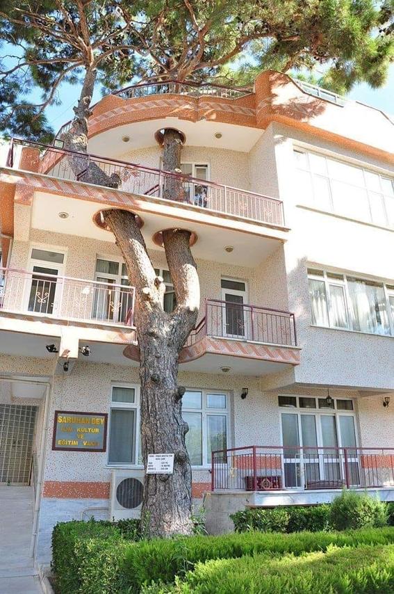 arbol 330 anos edificio turquia 2
