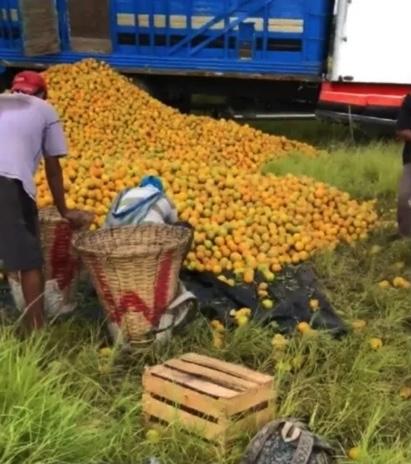 nino naranja naranjas moneda diez pesos rapina trailer 1