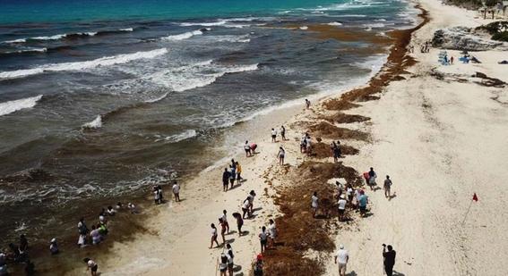 sargazo amenaza playas turismo quintana roo 1