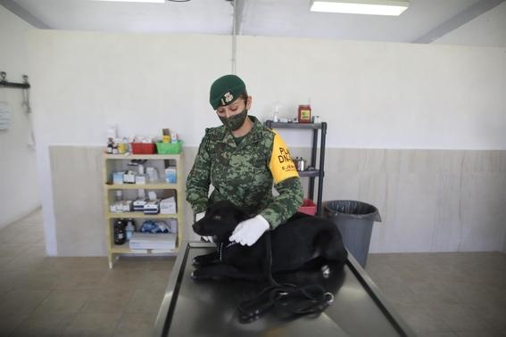 refugio soldados perros callejeros santa lucia perritos 1