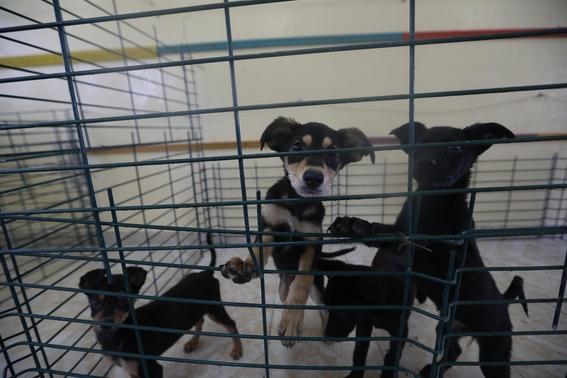 refugio soldados perros callejeros santa lucia perritos 2