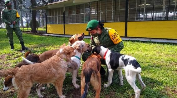 refugio soldados perros callejeros santa lucia perritos 3