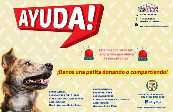 lugares adoptar perros ciudad de mexico perritos 2